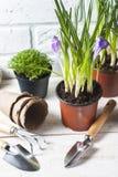 Fleurs de source avec des outils de jardin Photographie stock libre de droits