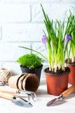 Fleurs de source avec des outils de jardin Images libres de droits