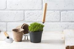 Fleurs de source avec des outils de jardin Image libre de droits