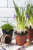 Fleurs de source avec des outils de jardin Photo libre de droits