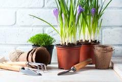 Fleurs de source avec des outils de jardin Photographie stock