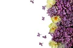 Fleurs de source d'isolement sur le blanc photo stock
