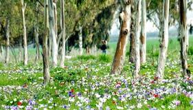 Fleurs de source dans la forêt images libres de droits