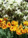 Fleurs de source dans le jardin 1 photo stock