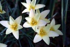 Fleurs de source dans le jardin 1 image stock