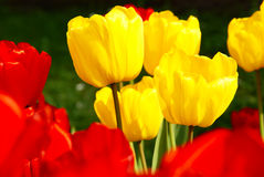 Fleurs de source dans le jardin Photos stock