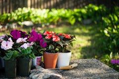 Fleurs de source dans le jardin Image libre de droits