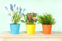 Fleurs de source dans le panier Photo stock