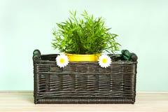 Fleurs de source dans le panier Images stock