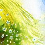 Fleurs de source dans le pré photographie stock
