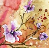 Fleurs de source dans le pré photo stock