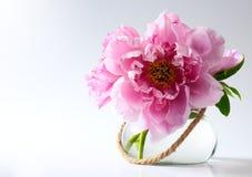 Fleurs de source dans le vase sur le fond blanc Photographie stock libre de droits