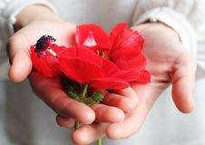 Fleurs de source de Fitst Photos libres de droits