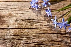 Fleurs de source de régfion boisée Photos stock