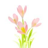 Fleurs de source de safran Photo stock