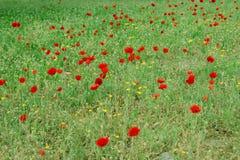 Fleurs de source en stationnement de ville Photographie stock