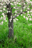 Fleurs de source sur l'arbre Images libres de droits