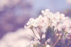 Fleurs de Sping Photographie stock libre de droits