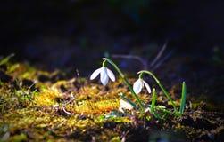 Fleurs de Sring Images stock