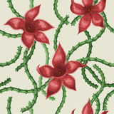 Fleurs de Stapelia Images stock