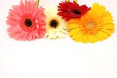 Fleurs de station thermale photographie stock libre de droits