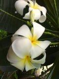 Fleurs de station thermale Images libres de droits