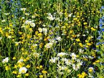 Fleurs de steppe image stock