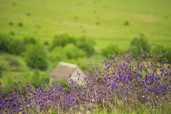 Fleurs de steppe Photographie stock