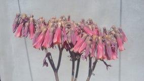 Fleurs de Succulents Photographie stock libre de droits