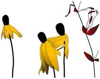 Fleurs de Susans observées par noir Image libre de droits