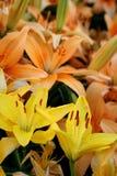 Fleurs de temps de source Photo libre de droits