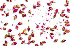 Fleurs de thé de Rose sur le fond blanc Photo libre de droits