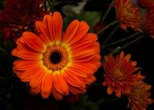 Fleurs de thanksgiving image stock