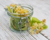 Fleurs de tilleul dans un pot Images stock