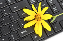 Fleurs de topinambour Images libres de droits