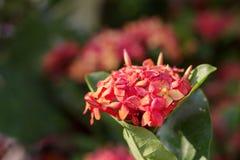Fleurs de transitoire avec la beauté images libres de droits