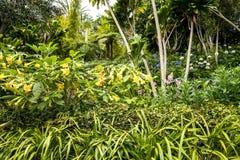 Fleurs de trompette dans un beau jardin chez Monte au-dessus de Funchal Madère Photo stock