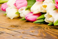 Fleurs de tulipe Photo stock