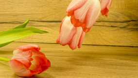 Fleurs de tulipe dans rouge-jaune Image stock