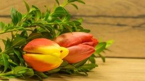 Fleurs de tulipe dans rouge-jaune Photo libre de droits