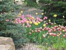 Fleurs de tulipe dans un parterre photos stock