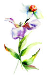 Fleurs de tulipe et de narcisse Images stock