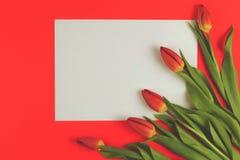 Fleurs de tulipes de ressort et carte de papier blanc sur le fond rouge photo libre de droits