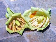 Fleurs de tulipifera de Liriodendron photographie stock libre de droits