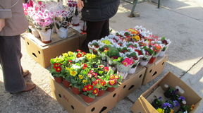 Fleurs de vente de rue Photo libre de droits