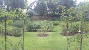 Fleurs de vert de la Norfolk Photographie stock libre de droits
