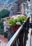 Fleurs de ville Photo libre de droits