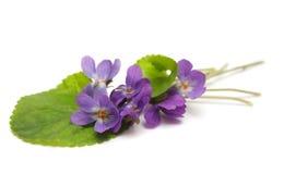 Fleurs de violette Photos libres de droits