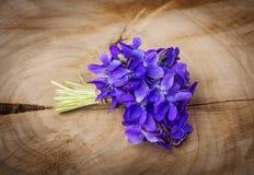 Fleurs de violettes de ressort Image libre de droits