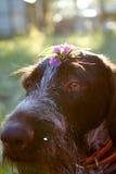 Fleurs de visage de chien Photos libres de droits